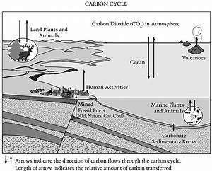 Carbon Cycle Quiz Pdf