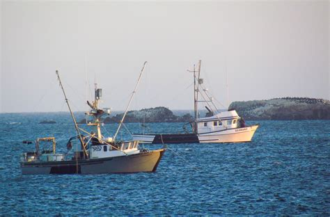 Bodega Bay Fishing Boats the salmon fishing in bodega bay
