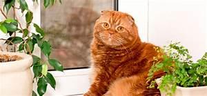 Welche Pflanzen Sind Für Hunde Giftig : welche pflanzen sind f r katzen giftig ~ Watch28wear.com Haus und Dekorationen