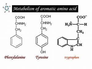 Metabolism Of Aromatic Amino Acid  U2013 Creative Proteomics Blog