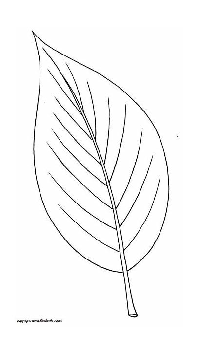Ash Leaf Coloring Leaves Printable Colouring Template