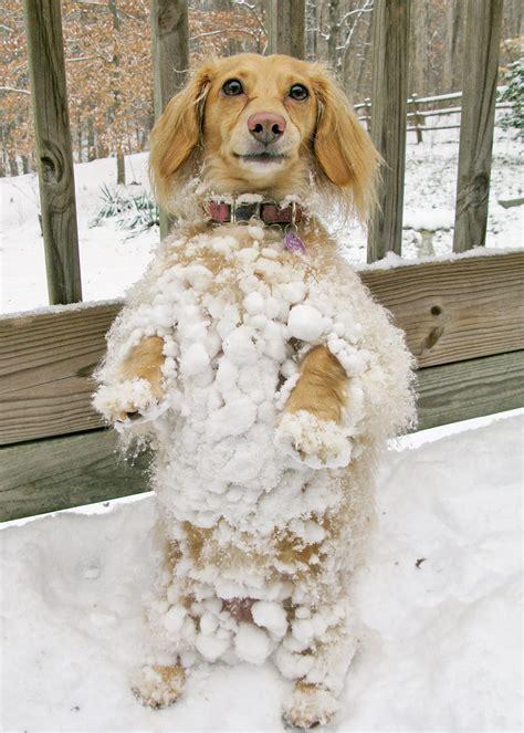 abominable snow dog  linda