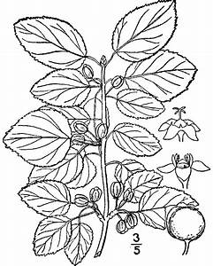 Soybean Drawing At Getdrawings