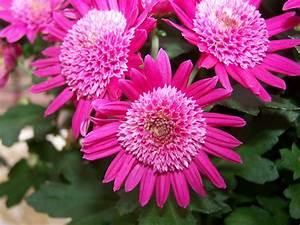 Wann Geranien Pflanzen : pflanzen balkon balkon pflanzen als sichtschutz f r den ~ Lizthompson.info Haus und Dekorationen