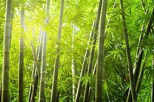 Bambus Vernichten Tipps : bambus eingrenzen wirksame methoden f rs begrenzen ~ Whattoseeinmadrid.com Haus und Dekorationen
