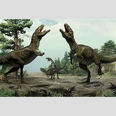 Scientists Find Real Life Jurassic Park In China, 8 New Species Discovered Livemint