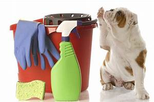 top 10 spring cleaning checklist for pet parents With dog cleaning house