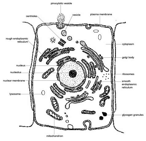 labeled plant cell  electron microscope