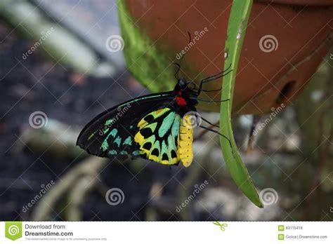 Butterfly World, Florida Stock Photo