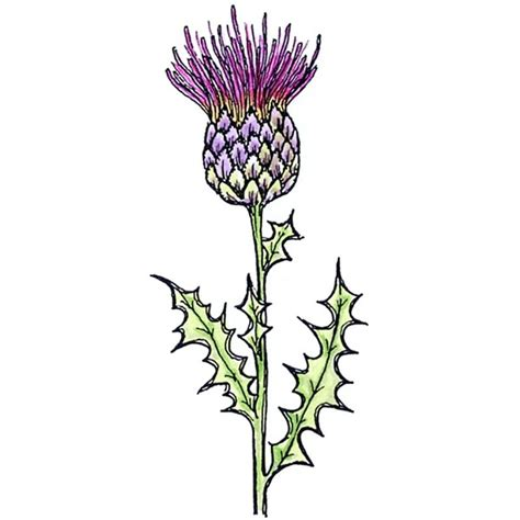 personal impressions thistle rubber stamp hobbycraft