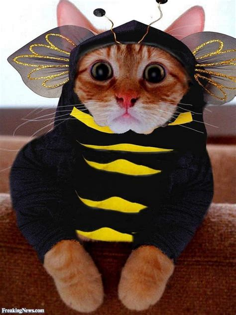adorable cats  costumes   brighten   day