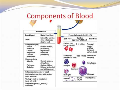 which blood component gives blood its color blood and blood typing ppt