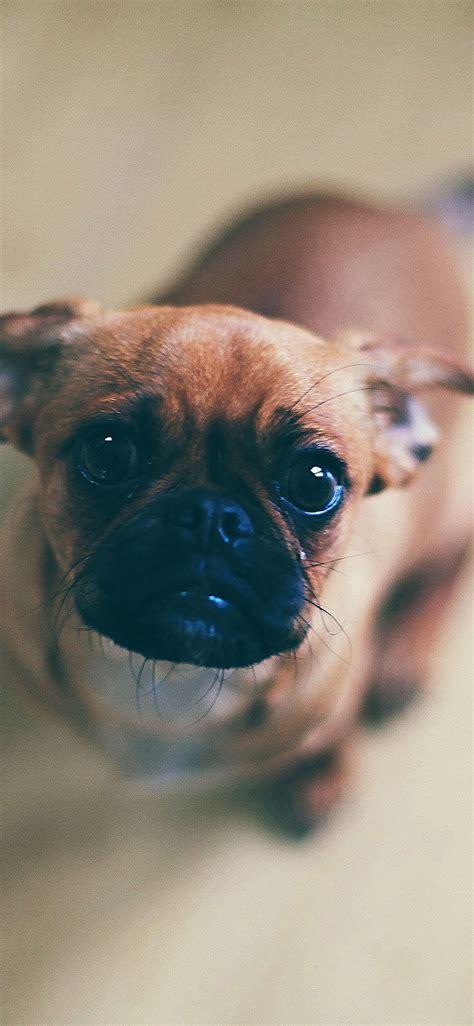 mb wallpaper feed  animal dog papersco