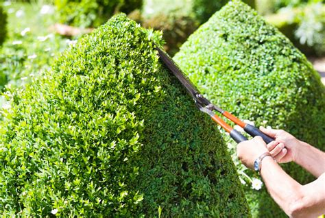 trimming bushes landscaping cape town professional landscaping services