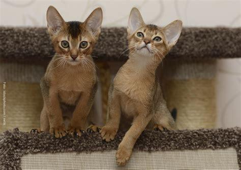 brechen bei katzen checkliste die grundausstattung f 252 r eine katze katzen