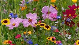 Aktuelle Blumen Im April : sommerwiese foto bild bearbeitungs techniken digitale gem lde blumen bilder auf ~ Markanthonyermac.com Haus und Dekorationen