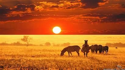 Safari African Wallpapers Wallpapersafari Joy