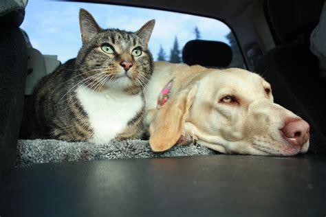 traveling   pet part  living   road