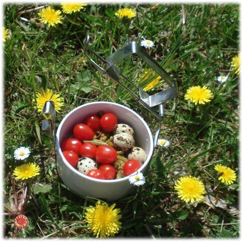 si鑒e printemps salade de printemps et si on mangeait