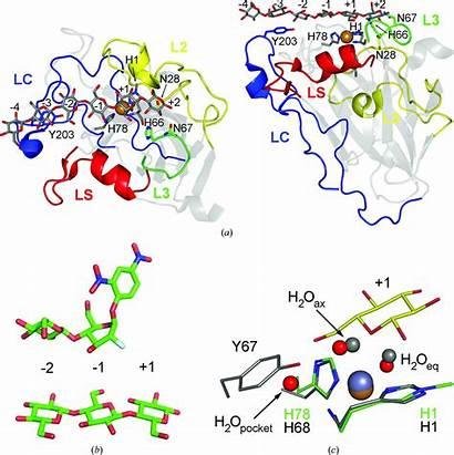 Iucr Polysaccharide Monooxygenases Lytic