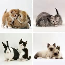 kits/bunnies