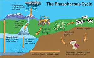The Role Of Phosphorus In The Garden