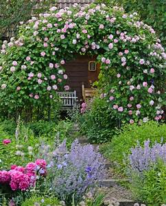 Begleitpflanzen Für Rosen : rosengarten gestalten und anlegen mein sch ner garten ~ Lizthompson.info Haus und Dekorationen