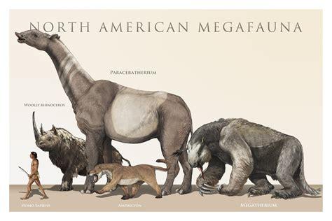 animals north american megafauna extinct went ice age mormon giant end many which america horses pleistocene extinction fauna mega mammals