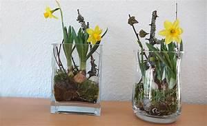 Blumenzwiebeln Im Glas : einfache blumen deko f r zuhause ~ Markanthonyermac.com Haus und Dekorationen