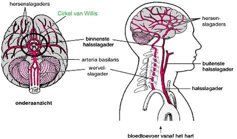 hersenen witte stof