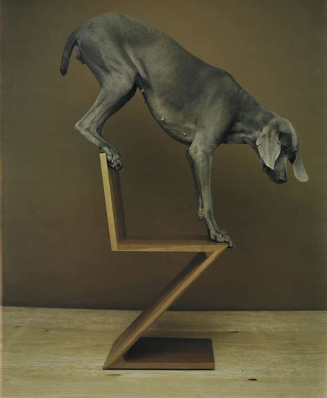 william wegman lisa sette gallery