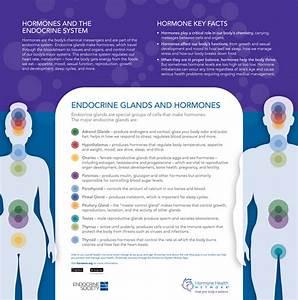Endocrine Glands And Hormones Key Facts  U2013 Des Daughter Network