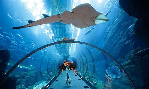 Dubai Aquarium & Underwater Zoo Yoga