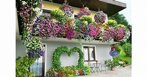 Heidekraut Winterhart Kaufen : balkonpflanzen online kaufen balkonpflanzen kaufen ~ Lizthompson.info Haus und Dekorationen