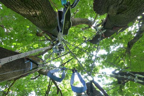 Baum Pflege by Baumpflege Und Freischnitte Baum Garten Dresden Gmbh