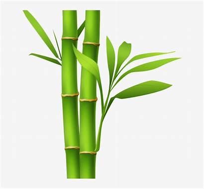 Bamboo Drawing Clipart Painting Clipartmag Nicepng
