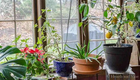 indoor gardening the simple pleasure of houseplants
