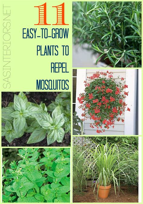 plants to repel mosquitos 11 easy to grow plants to repel mosquitos jenna burger