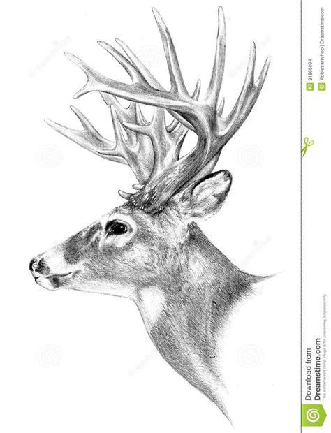 deer drawing ideas  pinterest deer paintings