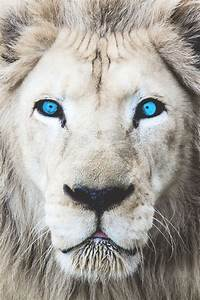 7940 best Big Cats images on Pinterest | Big cats, Wild ...
