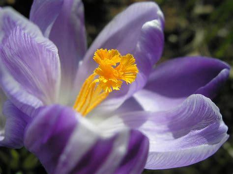 Manas ziedu fotogrāfijas. - Spoki