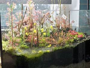 Pflanzen Terrarium Einrichten : killerpflanzen killerpflanzen mini terrarium ~ Watch28wear.com Haus und Dekorationen