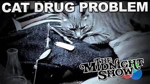 Cat Drug Problem