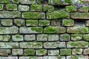 Feuchtigkeit Im Mauerwerk Beseitigen : mauerwerkstrockenlegung feuchte mauern beseitigen ~ Watch28wear.com Haus und Dekorationen