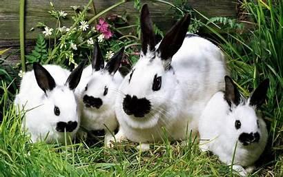 Rabbit Wallpapers Rabbits Konijnen Desktop 1080p Bunnies