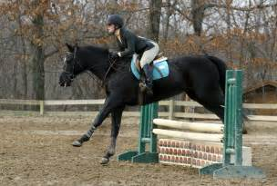 Black Horse Jumping Show