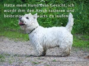 sprüche für hunde sprüche für hunde bnbnews co