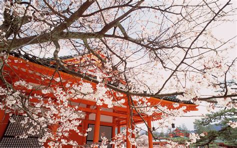 Japan Cherry Blossom Wallpaper 20 Fantastically Romantic Places Photo Gallery Rough Guides