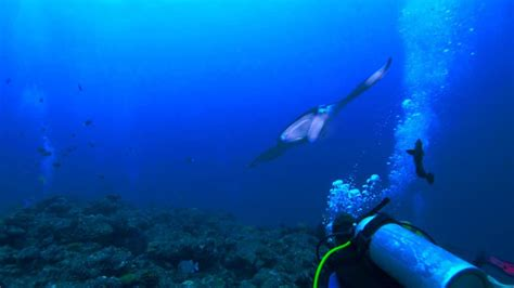 diving male atoll maldives diverland embudu