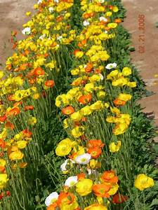 Flowers, U0026, Ornamental, Plants